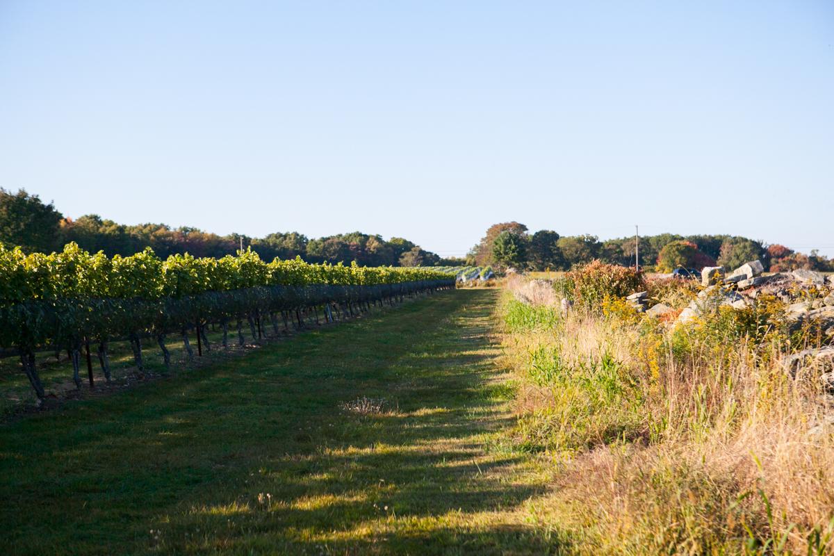 Stroll through their vineyard.