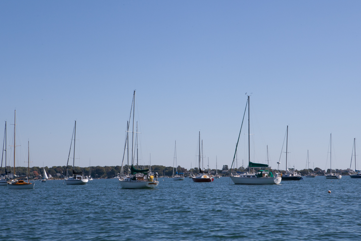 All the sailboats hanging out.