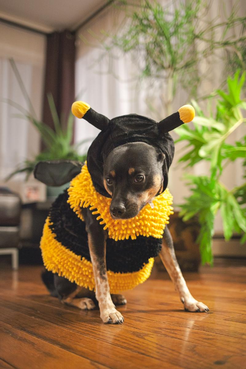 Busy Bee Halloween